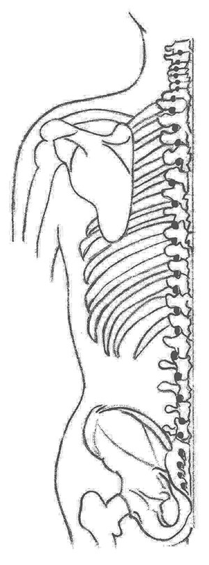 Spinal application of tuning forks